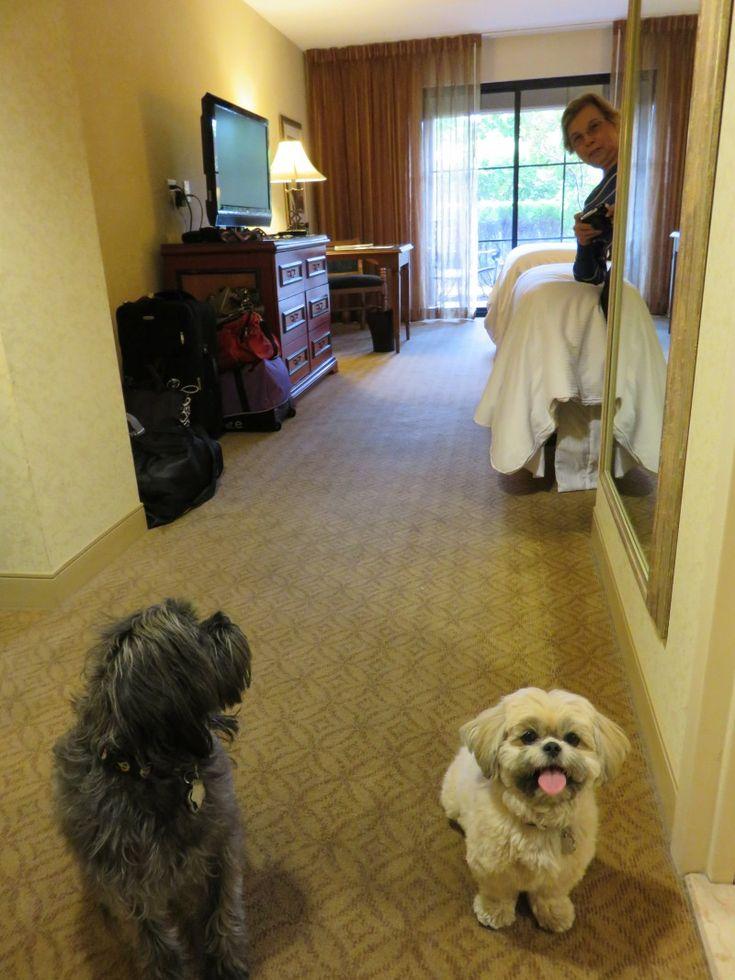 Dog Friendly Hotels Olympic Peninsula