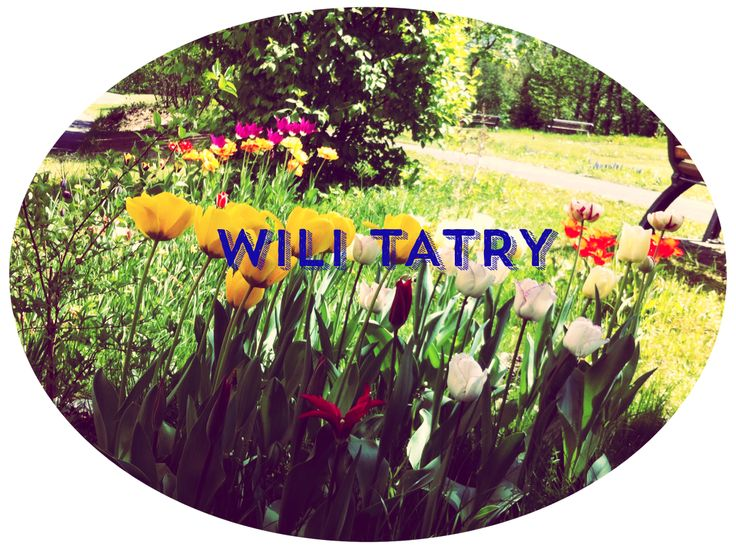 Those Spring Days in the Mountains... #wilitatry #beautifulmountains #Slovakia #hiking #spring #flowers