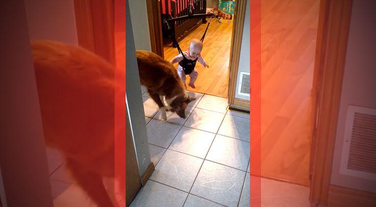 A kisbaba cselesen tanítja meg ugrálni a kutyát! Azzzigen!