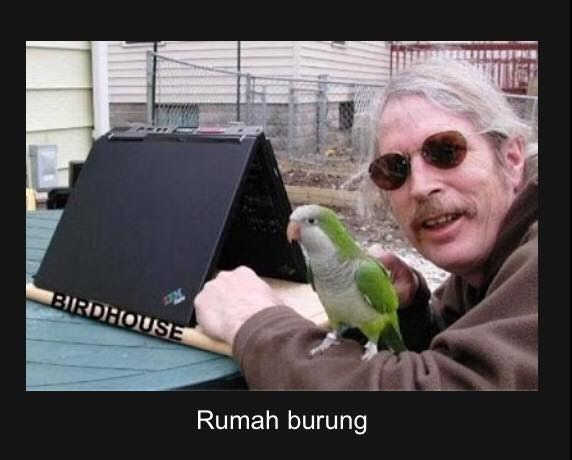 29 Gambar Burung Lovebird Lucu Gokil Ada Yang Namanya Gambar Burung Foto Burung Pasar Burung Suara Burung Peternakan Burung Budiday Gambar Burung Burung Lucu