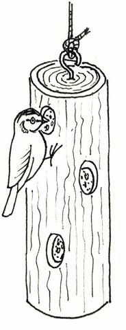 Obr.3: Krmítko ze špalíku s otvory.