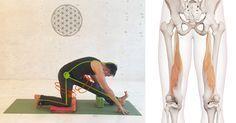 Verkürzte Muskeln in den Beinrückseiten sind oft eine Ursache für Rückenschmerzen. Das muss nicht sein! Hier findest Du wunderbare Yoga-Übungen, um die Beinrückseiten (Hamstrings) zu dehnen. Viel Freude am Üben! – Maria Meyer