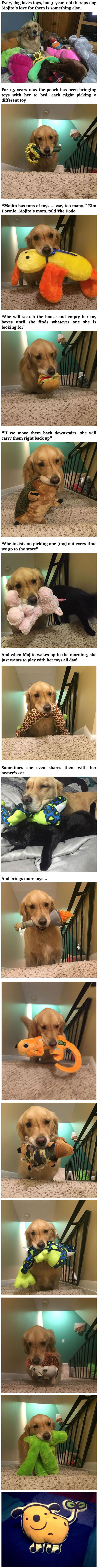 Therapy Dog Mojito Takes A Different Toy To Bed Each Night - 9GAG