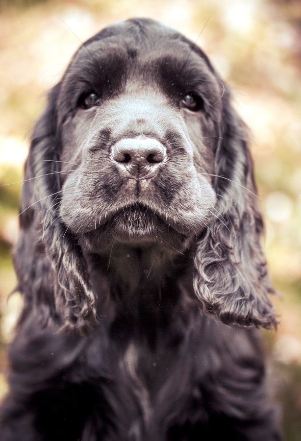 Hello handsome by Sarah Bourque on 500px