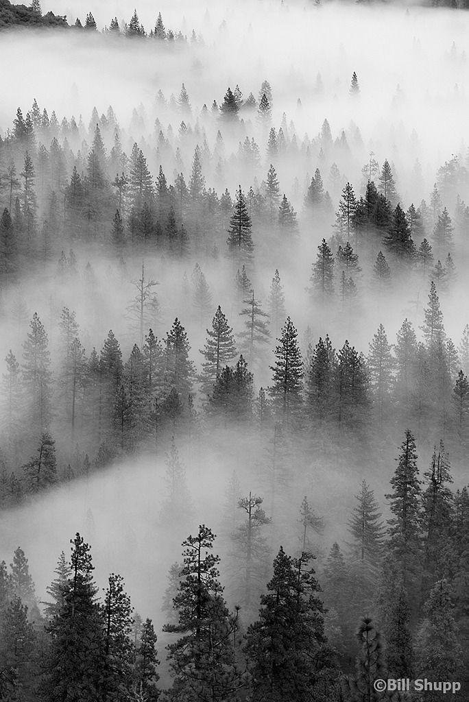 самым туманный лес рисунок тесте достаточно знаменитое