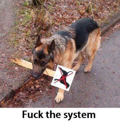 You mean No Dogs allowed   http://ift.tt/2ihbRbz via /r/dogpictures http://ift.tt/2ijAw1O  #lovabledogsaroundtheworld