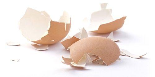 Možno ste nikdy nepremýšľali nad tým že škrupiny od vajec sa dajú využiť Škrupiny sú totiž bohaté na vápnik.Stačí ich … Čítať ďalej