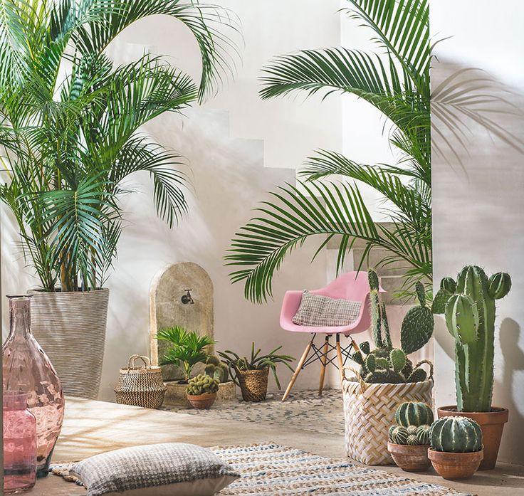 Décor naturel et végétal ! #Déco #Truffaut #cactus
