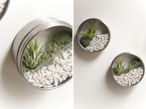 DIY Terrarium Magnets