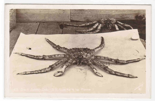 Giant Spider Crab 3 ft Long Alaska 1950s Real Photo RPPC Postcard | eBay