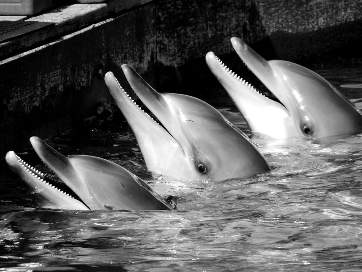 Dolphins at Sea World waiting for a dental checkup - Gold Coast, Surfers Paradise, Queensland, Australia.