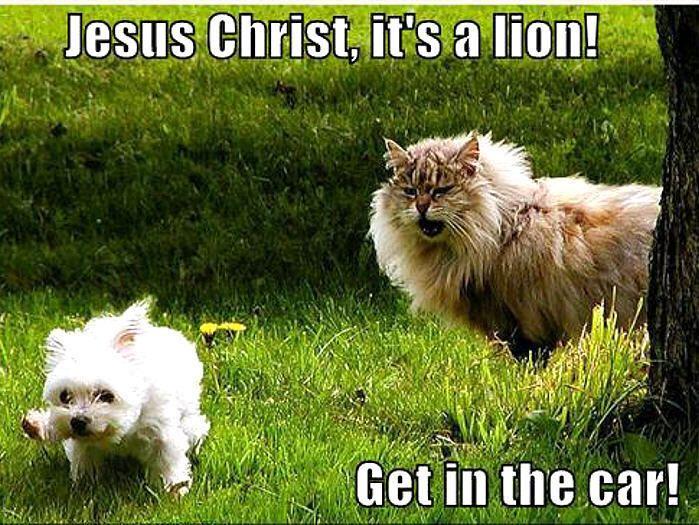 omg I laughed way to hard at this!