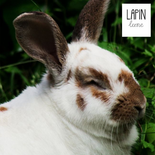 A post all about a very special rabbit....
