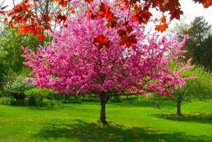 Best Yard Plants for Privacy in kentucky   Top Small Trees for Landscaping & Small Gardens Photos