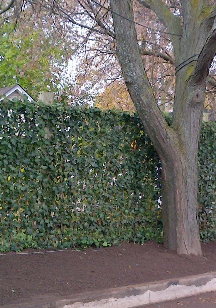 15 best images about green fences on pinterest chain for Living wall fence panels