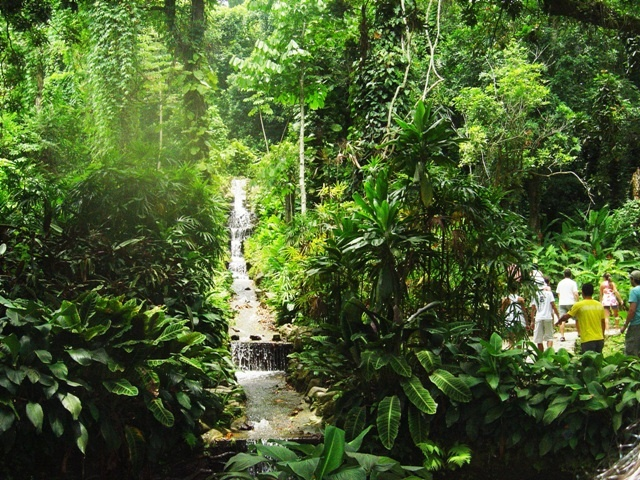 fotos jardim botanico do rio de janeiro:Jardim Botanico Do Rio De Janeiro