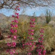 10 Plantas Nativas Top para el sur de Jardines de California