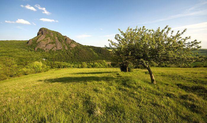 ČESKÉ STŘEDOHOŘÍ Bořeň Národní přírodní rezervace, zalesněný znělcový vrch nad Bílinou, který je největším znělcovým masivem ve střední Evropě. Je zde pseudokrasová jeskyně. Na skalách se vyskytuje hvězdice alpská, hvozdík sivý a další vzácné rostliny.