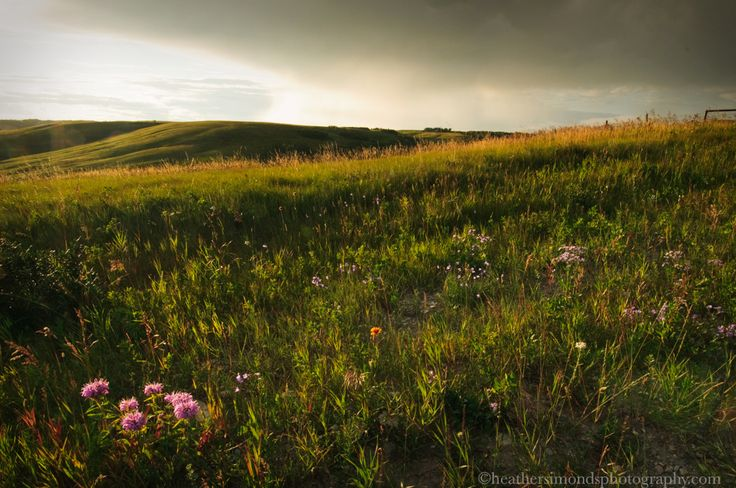 Summer Flora At Glenbow Ranch, Cochrane Alberta #Glenbow #photography #park