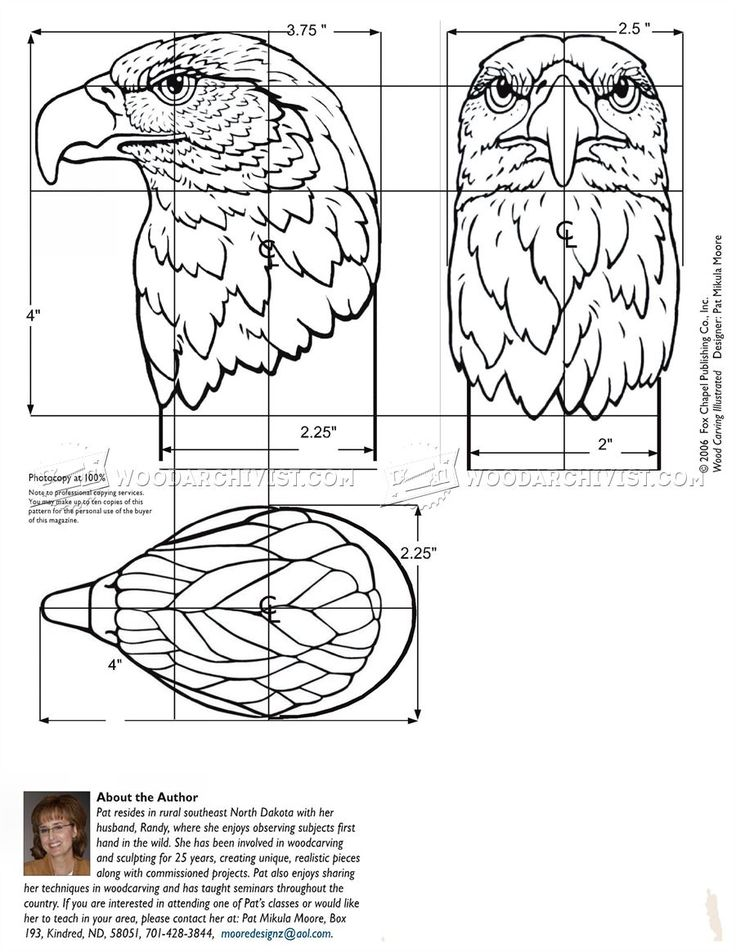 Carving Eagle Bust - Wood Carving