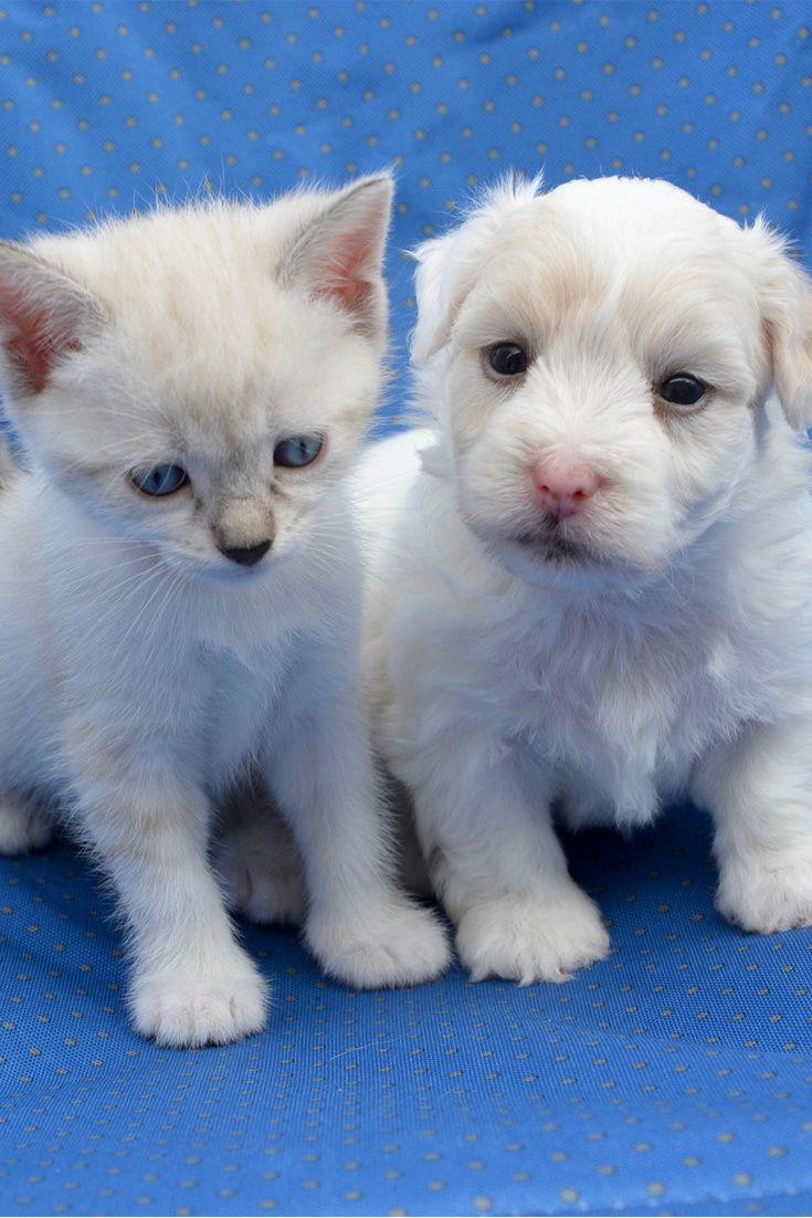 A Cute Future Friends Cute Puppy Kitten Friends Cuteanimals