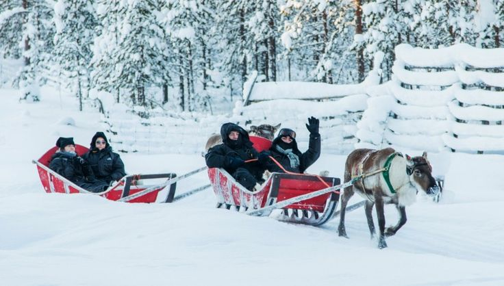 Unique reindeer safaris in the nature of Finnish Lapland with Arctic Circle Snowmobile Park