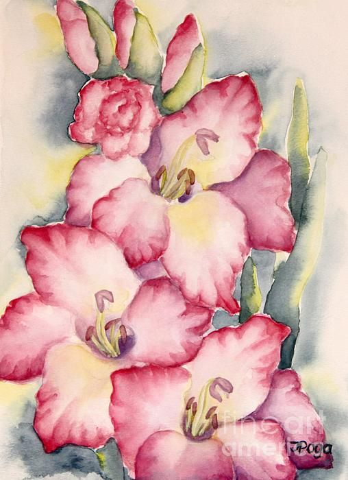Gladiolus in pink, watercolor painting