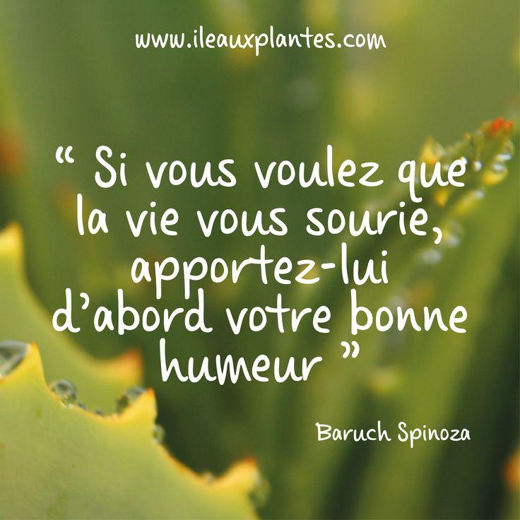 La citation du jour par Baruch Spinoza, philosophe néerlandais ! ______ #aloe #aloearborescens #ileauxplantes #citation #citationdujour #pensée #reflexion #penséedujour #pensee #penseedujour #citationpositive #penséepositive #bonnehumeur
