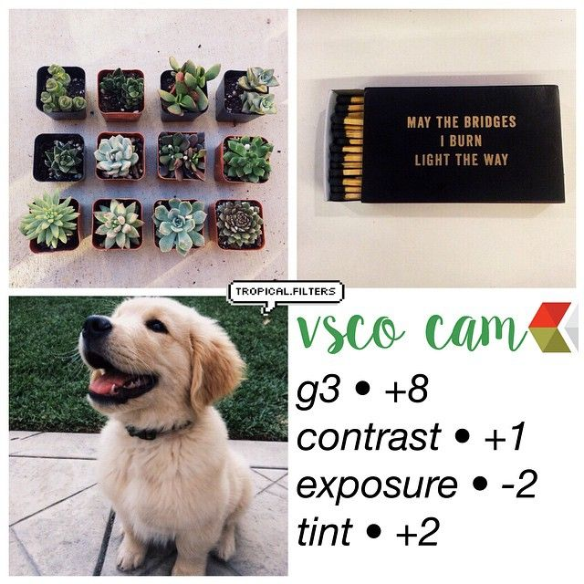 Instagram media by tropical.filters - that dog is so cute omg. This filter looks good on all photos  -  what color is your bedroom wall?