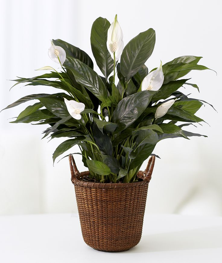 10 Plants You Canu0027t Kill: No Green Thumb Needed. Indoor House ...