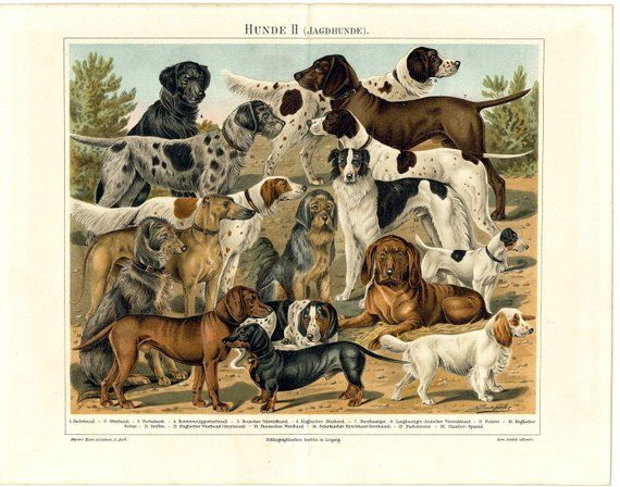 This Beautiful Antique Lithography Print Is From Meyers