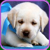 Γλυκό κουτάβια και τα σκυλιά