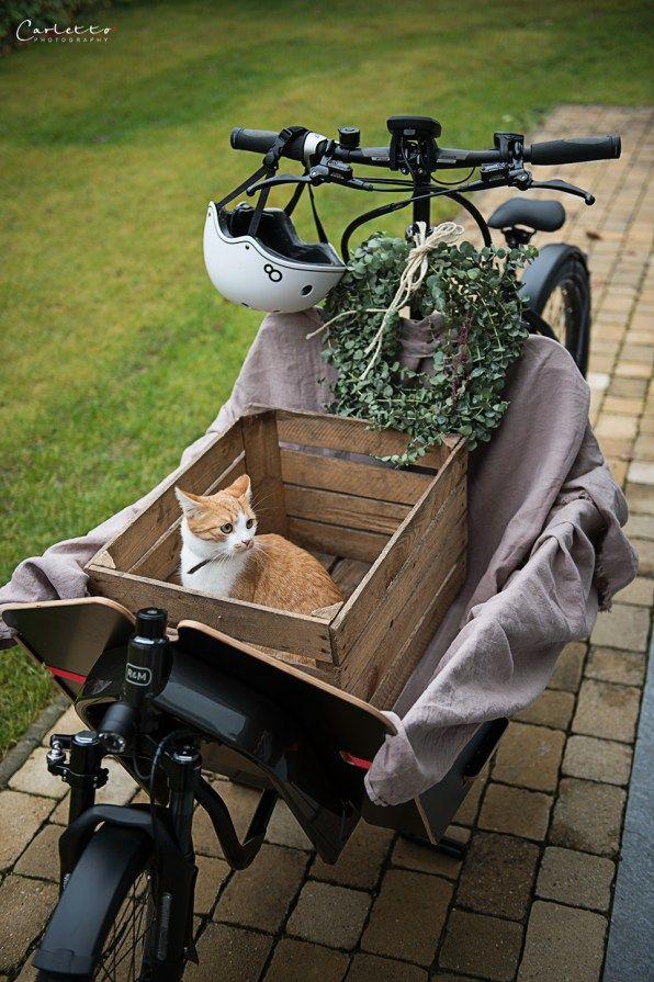 ebike, bike, fahrrad, rad, fahrradfahren, lastenrad, kulinarische reise, kulinarische tour, helm, helmet, reifen, wheels, nature, katze, cat