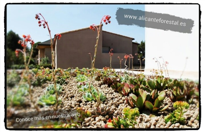 17 mejores im genes sobre cubiertas vegetales en pinterest - Cubiertas vegetales para tejados ...