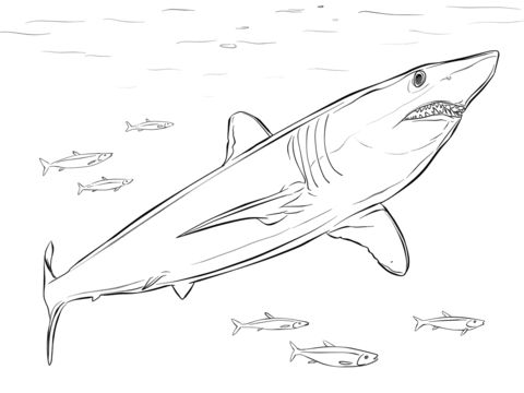 Shortfin Mako Shark coloring page from Mako sharks category. Select from 21947 printable crafts of cartoons, nature, animals, Bible and many more.