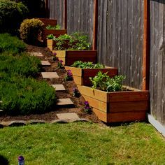 Garden boxes for part of slope that did not get walled