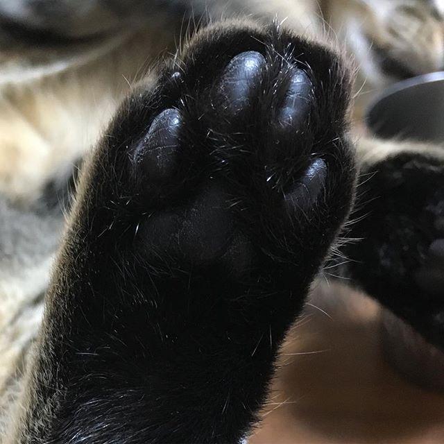 ぼくは真っ黒肉球@肉球の日 #猫の気持ち #猫  #ねこ #100日目 #にゃんこ #里親 #キジトラ #きじとら #猫好きな人と繋がりたい #猫好き #にゃんすたグラム #猫初心者 #猫部門エントリー #保護猫 #愛猫 #猫部 #肉球 #肉球の日