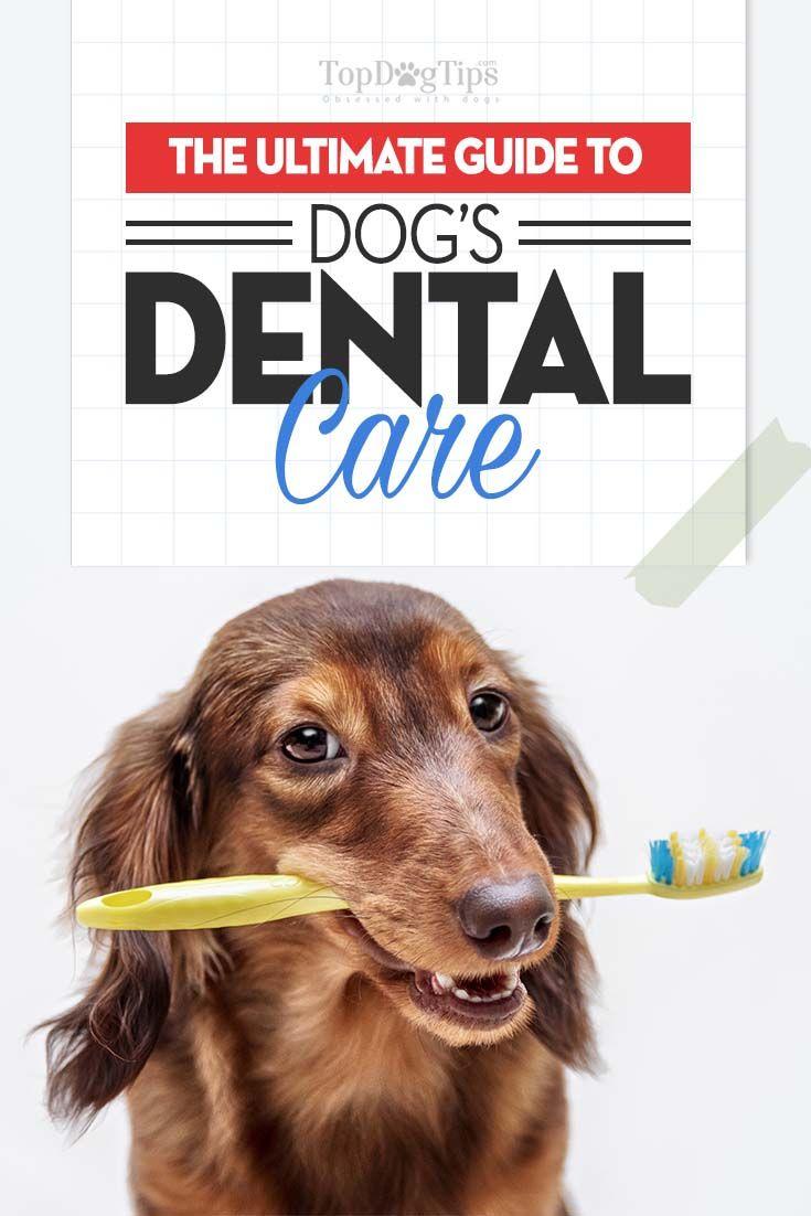 Dog Day Care Houston