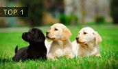 All Dog Breeds, All Dog Types, All Dog List Names & Pictures...This is a great website to get information on dog breeds!