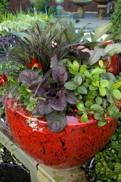 Winter Container Plants for Garden