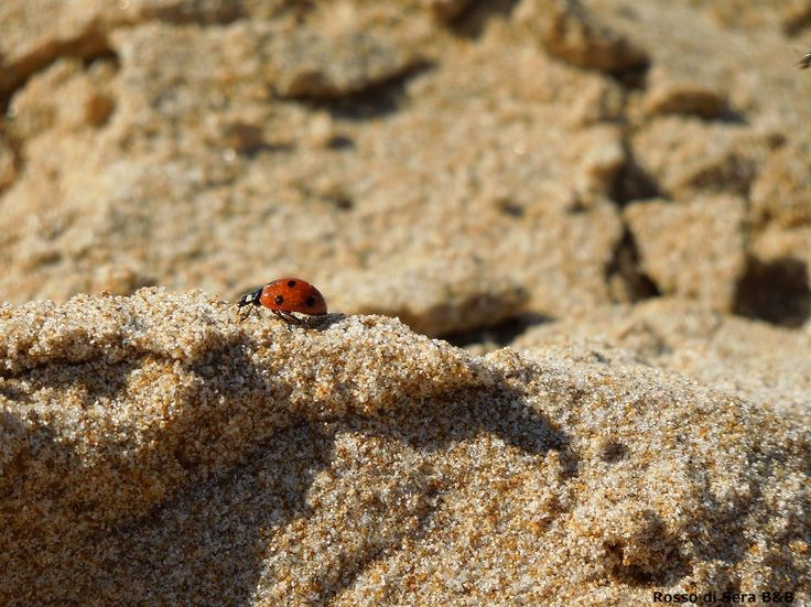 I Fiori Menfi Sicilia Ladybug
