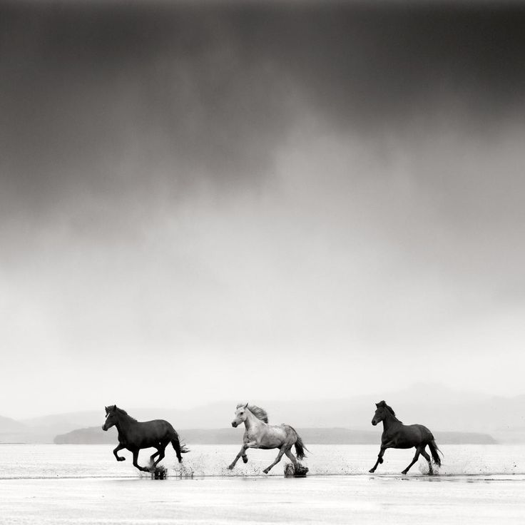 Jonathan Chritchley Photograph @ PurePhoto. Great resource for photographs.