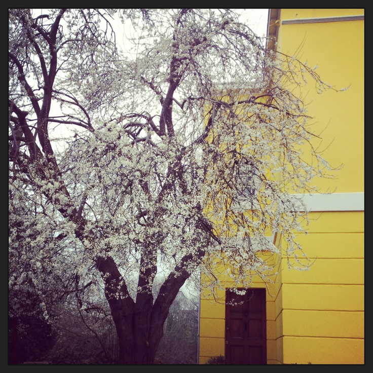 A yellow house