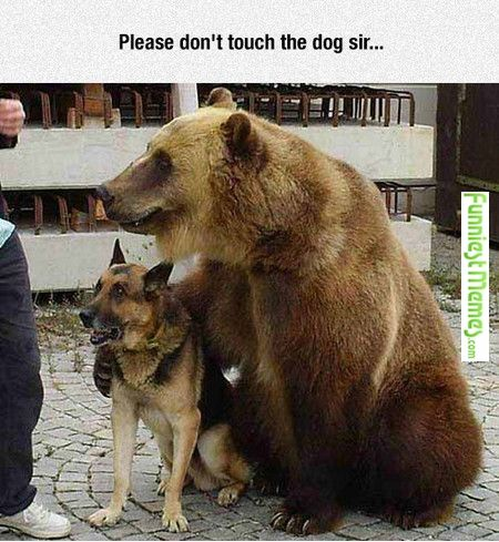 Please don't touch the dog sir...