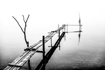 Annika Öhman - Mist in Morga hage, black & white photo art, prints & posters