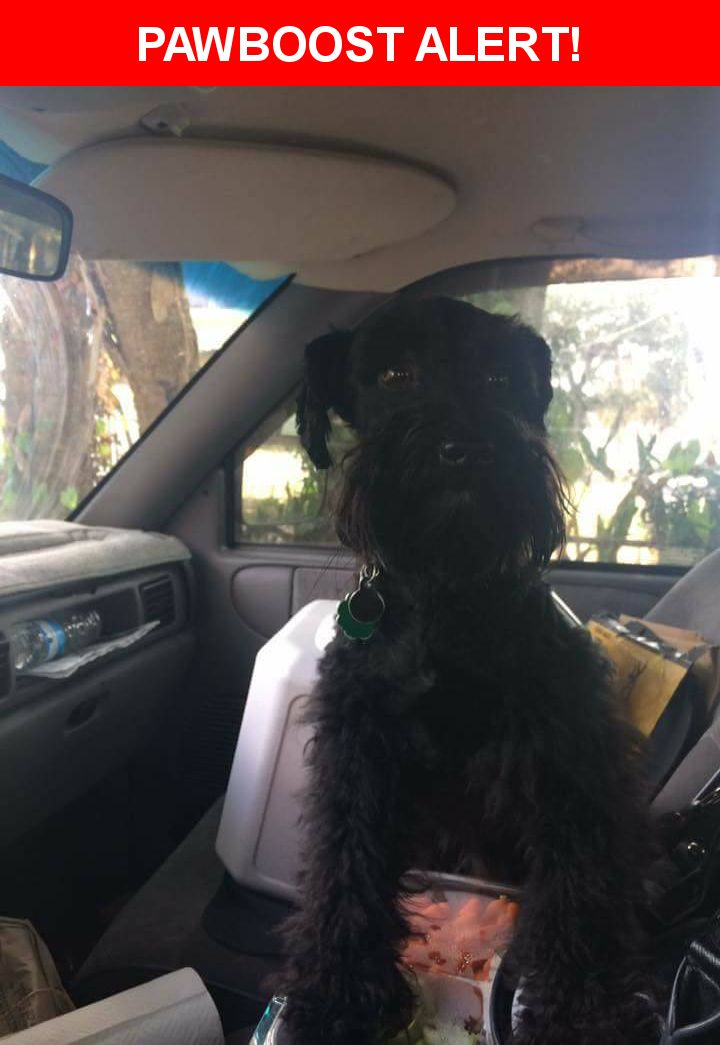 Please spread the word! Enzo was last seen in Tampa, FL 33605.  Description: male, shy but friendly, fixed, chipped, checkered collar, approx 5lbs  Nearest Address: 1001 E 15th Ave, Tampa, FL, United States