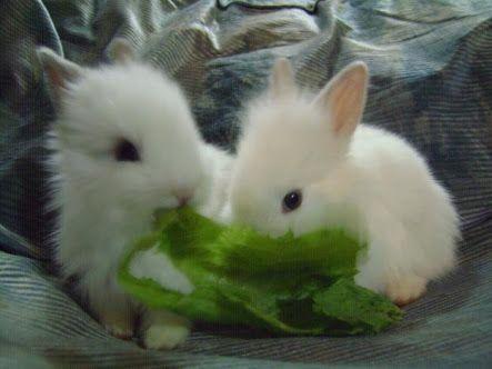 72 mejores imgenes de conejitos en Pinterest  Animales