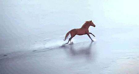 running horse on beach freedom inspiration