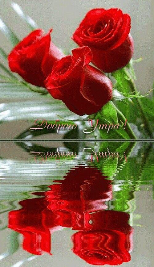 Свадьбу анимации, гиф картинки с добрым утром с розами