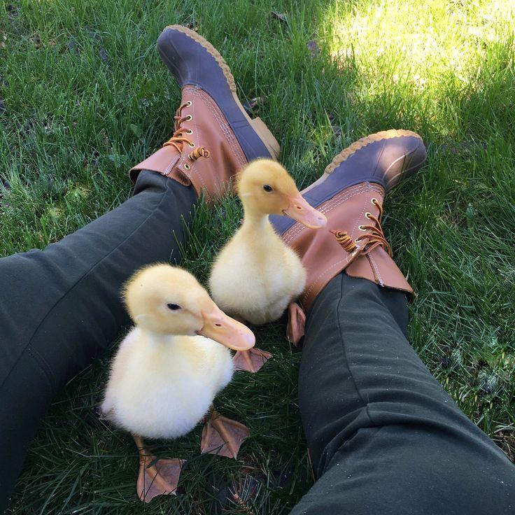 Duck, duck, boots! (Photo via Instagram: robinvancrabb) L.L.Bean Boots and ducklings.